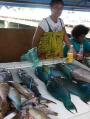 Parrot fish at Suva Fish market